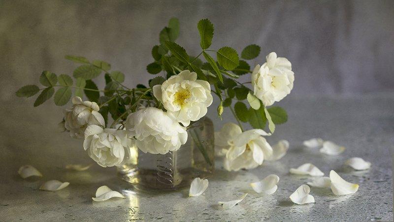 белый шиповник , стекло, лепестки Белые лепесткиphoto preview