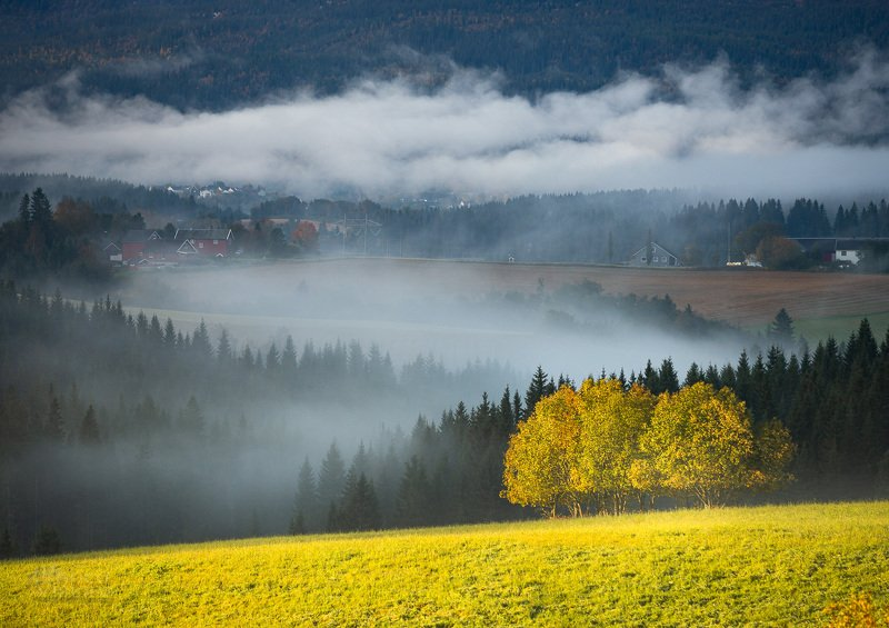 fog,morning,autumn,norway,tree,trees,light,contrast, Foggy landphoto preview