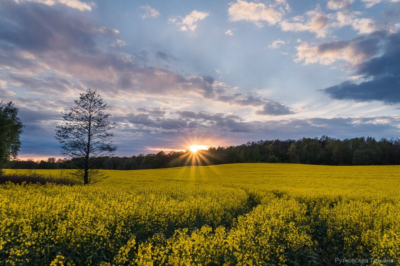 Закат над рапсовым полемphoto preview