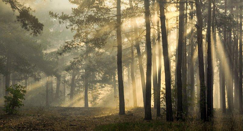 landscape, пейзаж, лес, утро, прогулка, природа, утроphoto preview