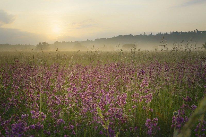 Утро летнего дня.photo preview