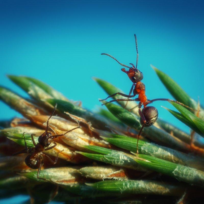 муравьи муравьи, отражающие атаку.photo preview