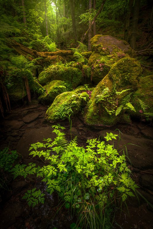 landscape, forest, spring, green, eod, woodland, tree, trees, light, nature Spring forestphoto preview
