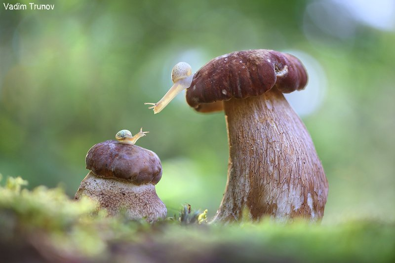 улитка, белый гриб,  макро Притяжениеphoto preview