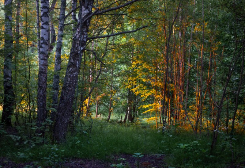 утро лучи свет лес Лес просыпаетсяphoto preview