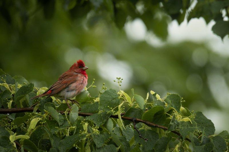 природа, лес, поля, огороды, животные, птицы, макро Дождь прошел фото превью