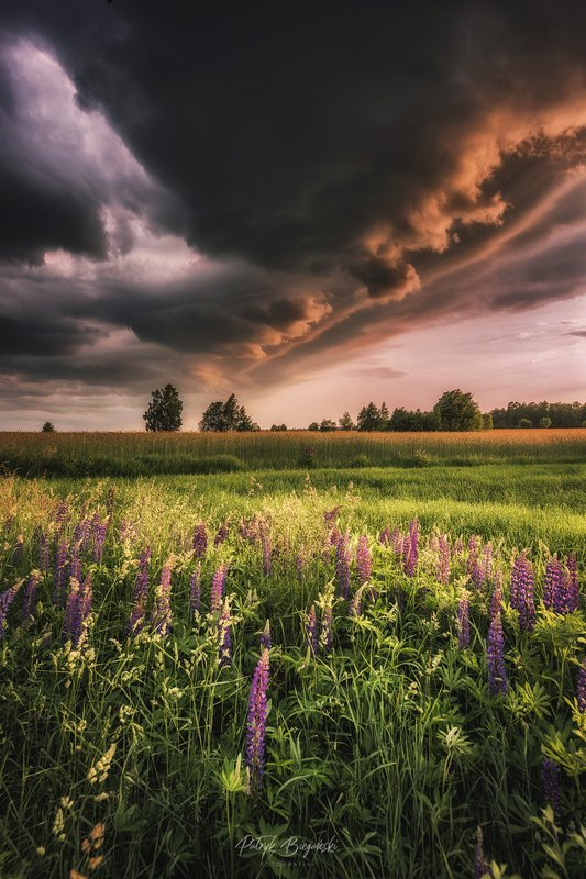 sunset, clouds, green, sunlight, light, village, rural, trees, nature, dramatic, sky, summer, storm, countryside, cottage, architecture, Lupinusphoto preview