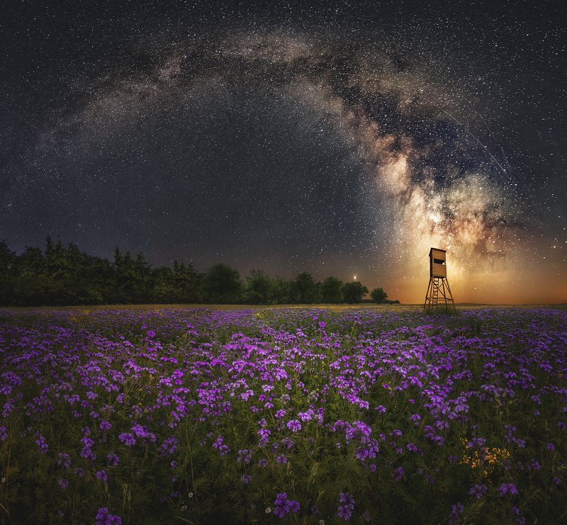 night, sky, milky way, stars, star, field, phacelia, meadow, poland,  Phacelia field by nightphoto preview