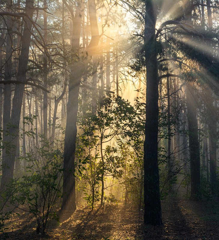 landscape, пейзаж, утро, лес,  деревья, солнечный свет,  солнце, природа, солнечные лучи,  прогулка, солнечное утроphoto preview