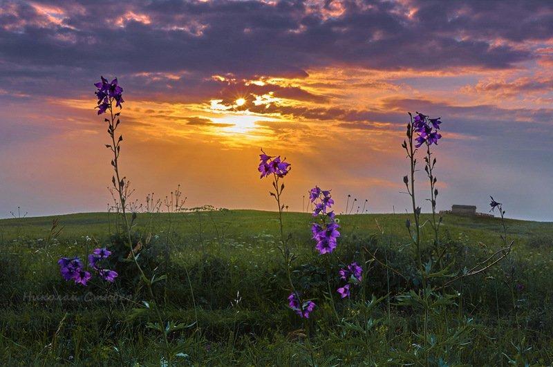 кавказ, горы, лето, колокольчики Колокольчикиphoto preview