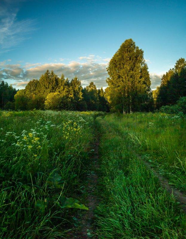 Вятка, пейзаж, тепло, лето, закат, поле, дорога, трава, штиль, небо, облака, вечер, хорошо, деревья, лес, зелень Вечереетphoto preview