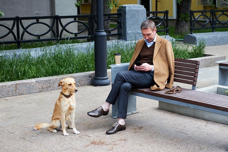 стрит, собака, друг, человека Друзьяphoto preview
