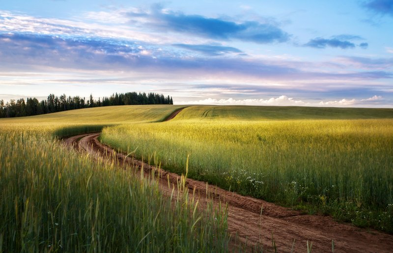 Поле, дорога, пейзаж, Шаркан, lanscape Поля Удмуртии, Шаркан photo preview
