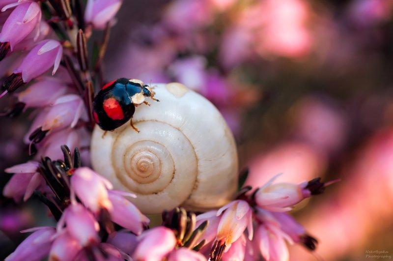 макро, природа, божья коровка, эрика, боке, насекомые, весна, macro, nature, ladybug, erica, bokeh, insects, spring, В зарослях эрикиphoto preview