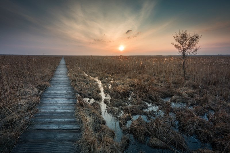swamp grass sky mood clouds tree sun sunset Podlasie Poland You shall lead me along this path...photo preview