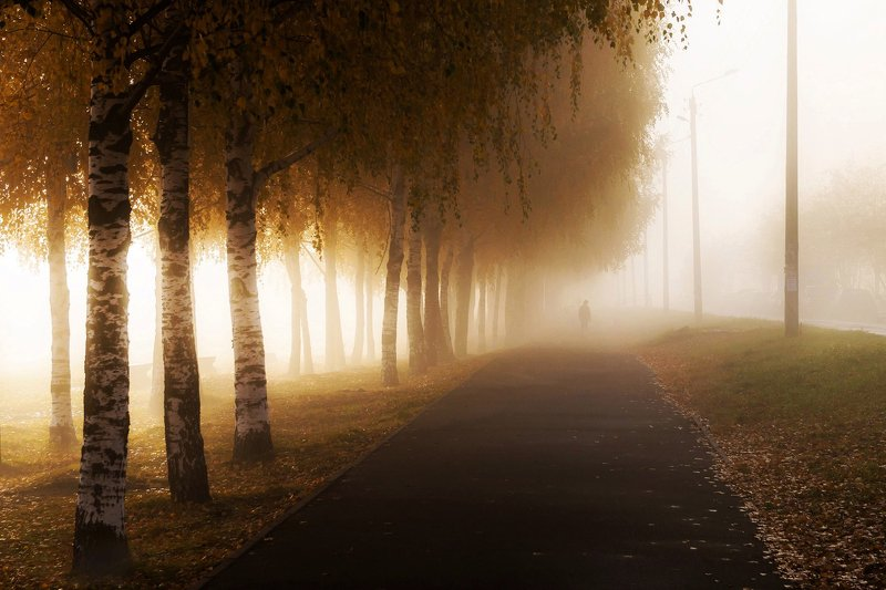 россия, утро, туман, осень, пейзаж, перспектива, город, мрачно, набережная, вятка, прогулка, рассвет, дорожка, тротуар, береза, аллея, дорога, парк Туман в городе.photo preview