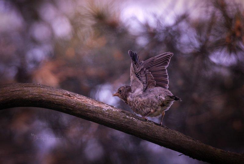 природа, лес, поля, огороды, животные, птицы, макро ... орлята учатся летать :) фото превью
