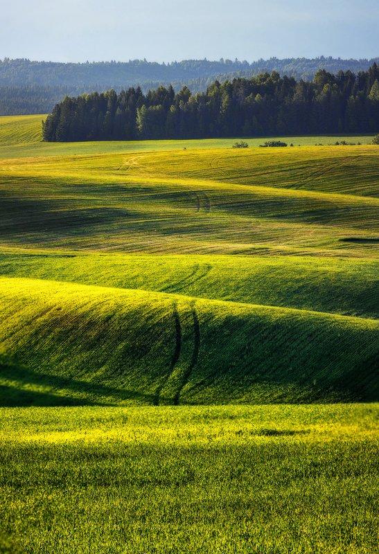удмуртия, поля, пейзаж, холмы, утро, пейзаж, шаркан, шарканский район Поля Удмуртииphoto preview