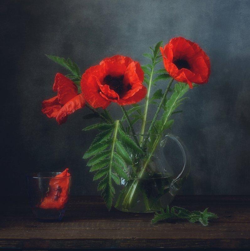 натюрморт,цветы,лето,маки маки... фото превью
