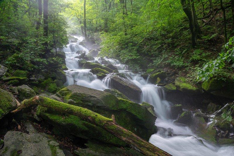 forest, summer, place, korea, trees, waterfalls, moss, light Green spiritphoto preview