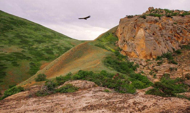 горы,вершины,пейзаж,небо,деревья,дагестан,природа Горные мотивы..photo preview