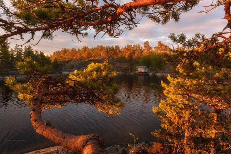 ладога,пейзаж,вечер,закат,лето Свет Ладоги...photo preview