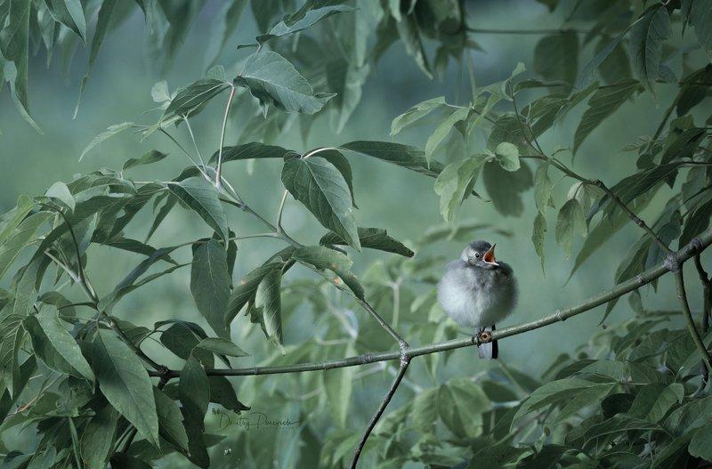 природа, лес, поля, огороды, животные, птицы, макро Шарик хочет кушать фото превью