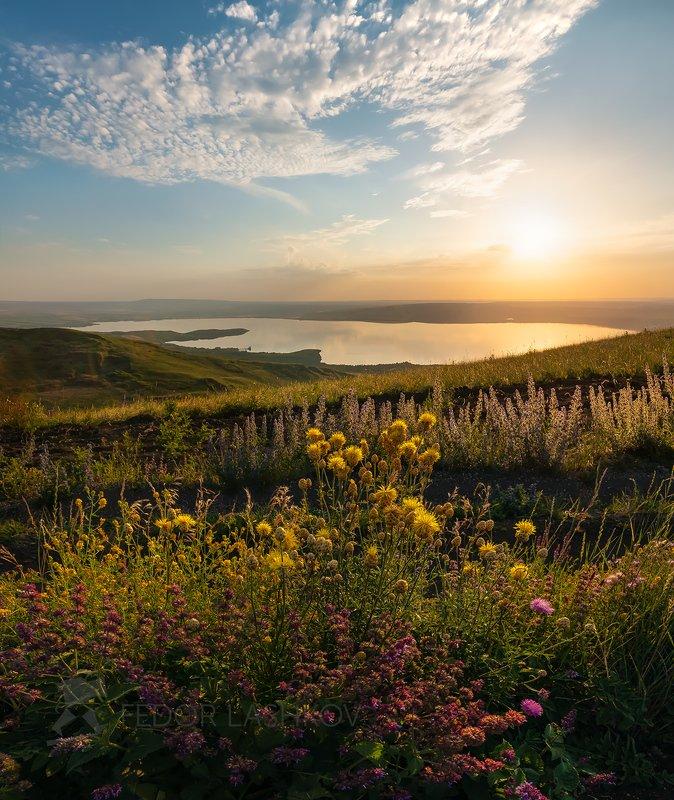 ставропольский край, путешествие, озеро, облака, небо, закат, сенгилеевское озеро, берег, степь, степное, разнотравье, цветы, луг, василёк, солнце Степное разнотравьеphoto preview