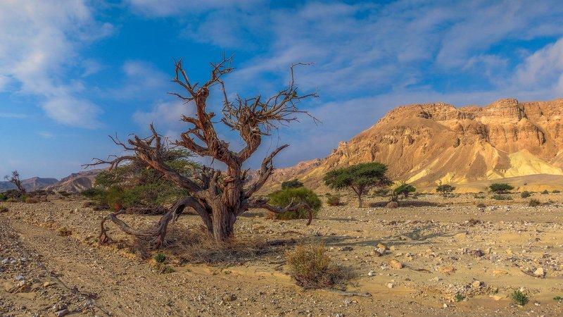 израиль, арава, рассвет, горы, небо, пейзаж, природа, пустыня видphoto preview