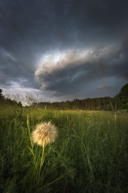 storm sky clouds wildflower meadow Podlasie Poland mood Pooh in trouble...photo preview
