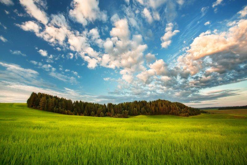 удмуртия, поля, пейзаж, холмы, утро, пейзаж, шаркан, шарканский район Шарканский район Удмуртия.photo preview