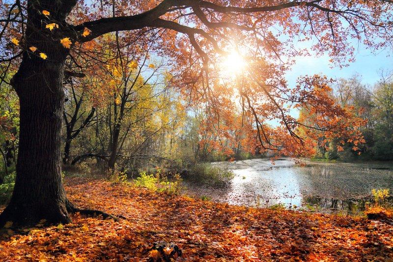 осень, парк, пруд, солнце, листва Осенний мотивphoto preview