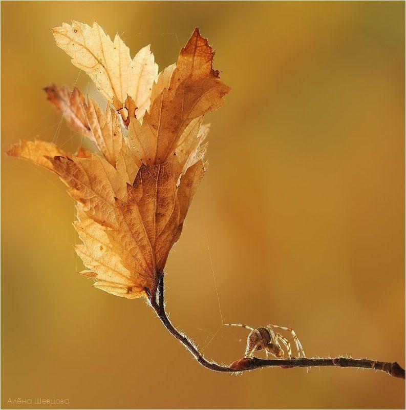 Осенние зарисовкиphoto preview