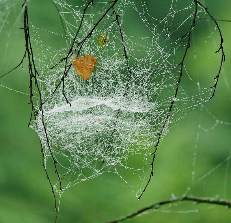 Осеннее гнездоphoto preview