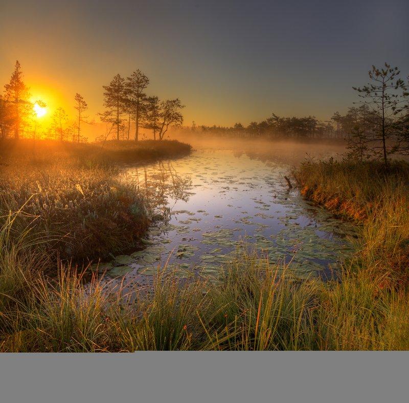 на болотах...photo preview