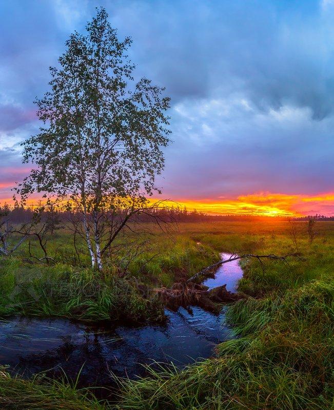 Ленинградская область, закат, луг, речей, берёза, дерево, река, берег, тучи, синий, одно дерево,  Берёза на берегу рекиphoto preview