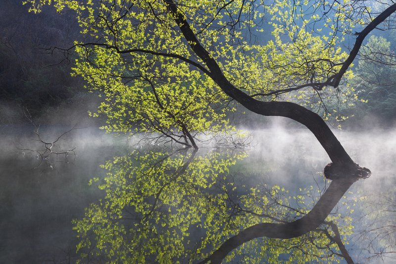 willow tree, spring, light, green, reflection, water, woods Light greenphoto preview