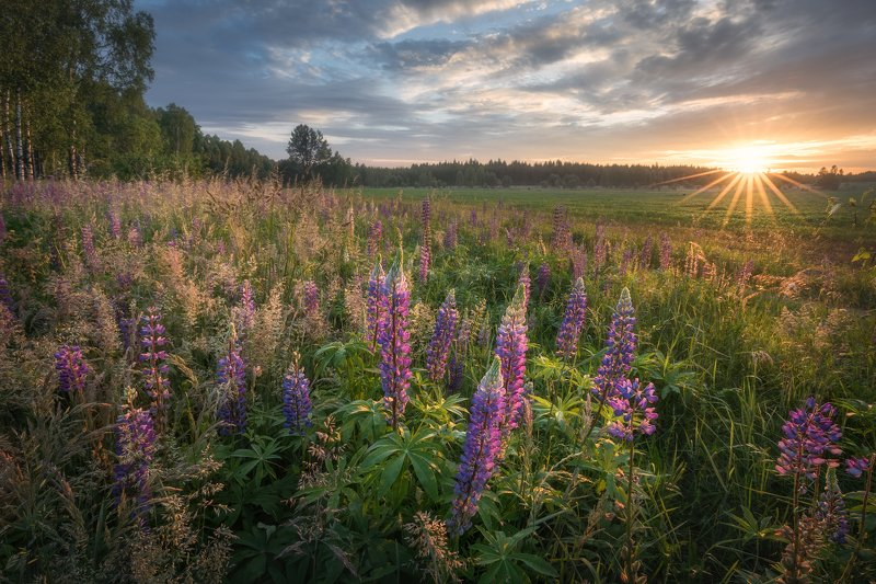 wildflower lupine sunrise sunstar sky clouds colours mood Podlasie Poland Fairytales from Podlasie...photo preview