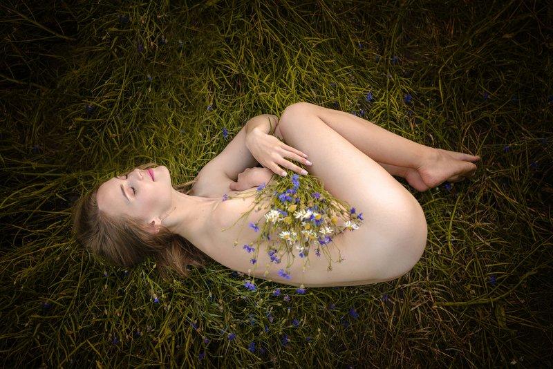 девушка, лето, цветы, васильки, поле, вечер, ню, обнаженный, кожа, свет Рождение летаphoto preview