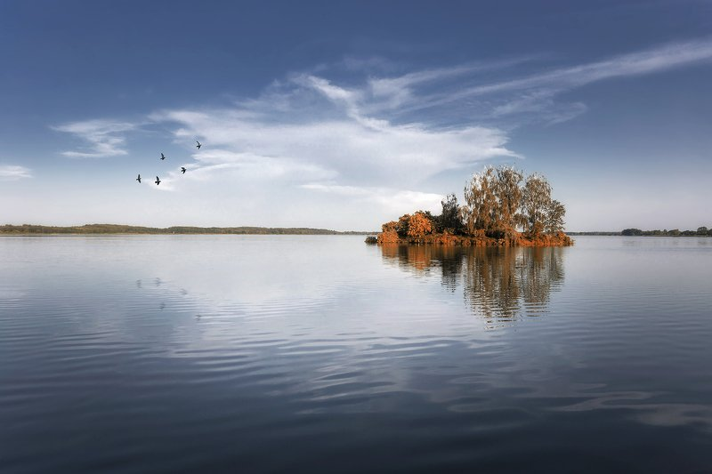 lake, poland, island, trees, minimalism, birds, spring, sky Island on the lakephoto preview