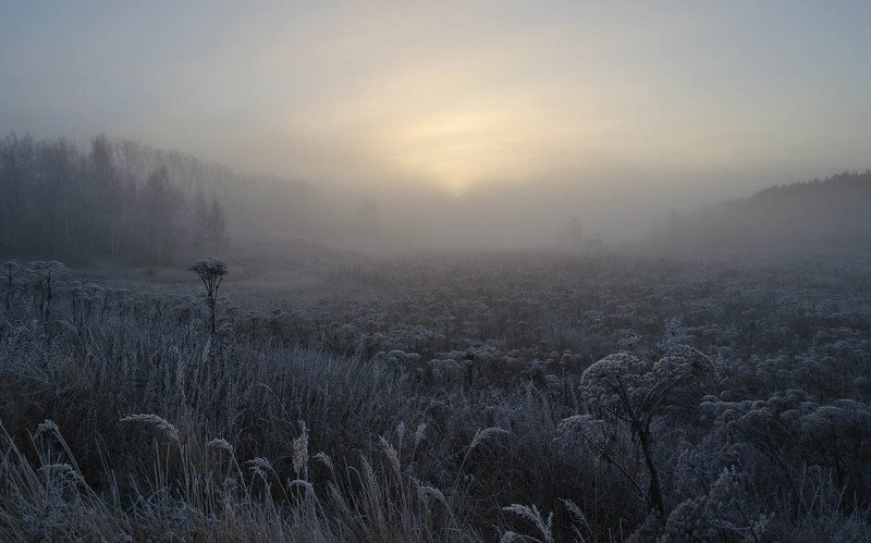 утро, туман, архангельское Не шербурские зонтичныеphoto preview