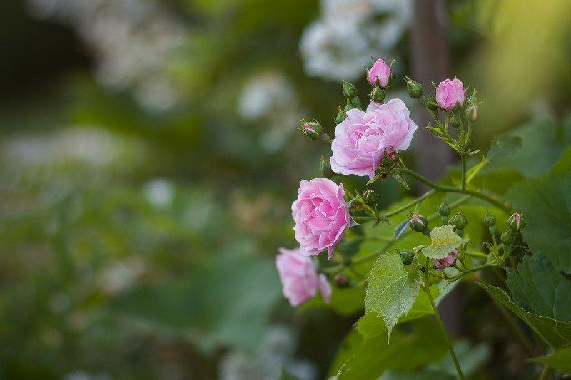 Розыphoto preview