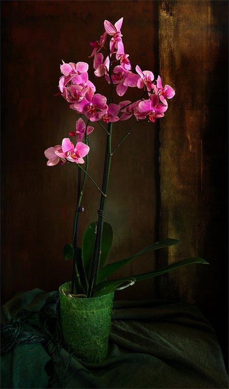 still life, натюрморт,    винтаж,    цветы,  орхидея, минимализм, натюрморт с орхидеейphoto preview