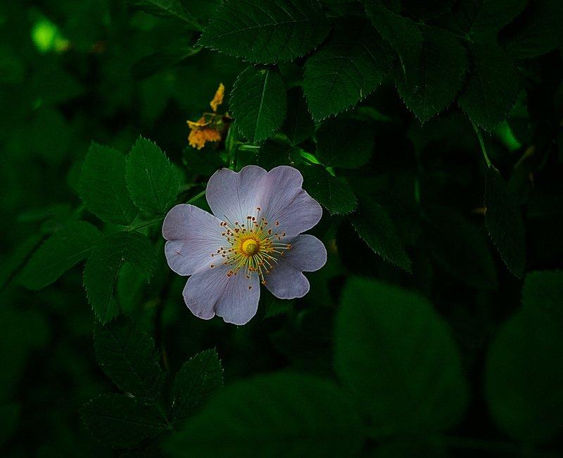 цветочекphoto preview