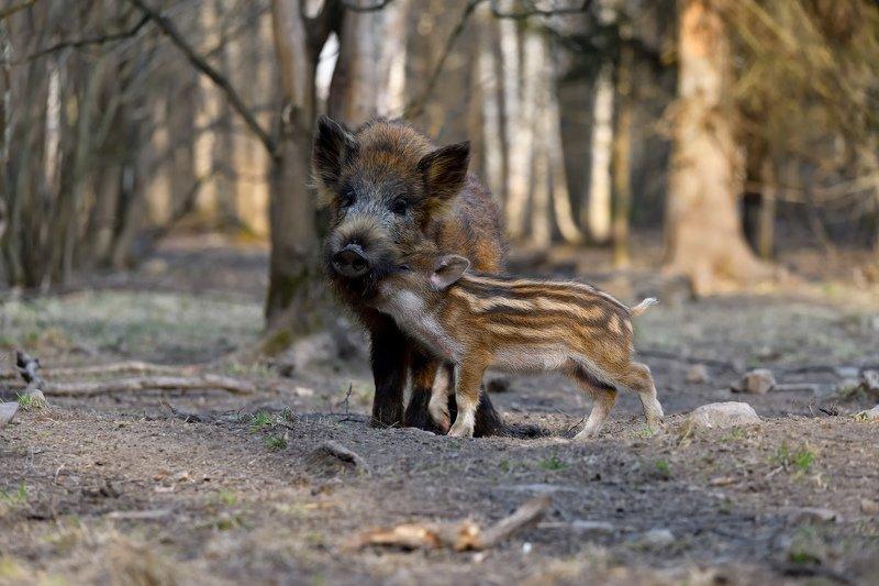 лес,животные нежные чувства 2photo preview