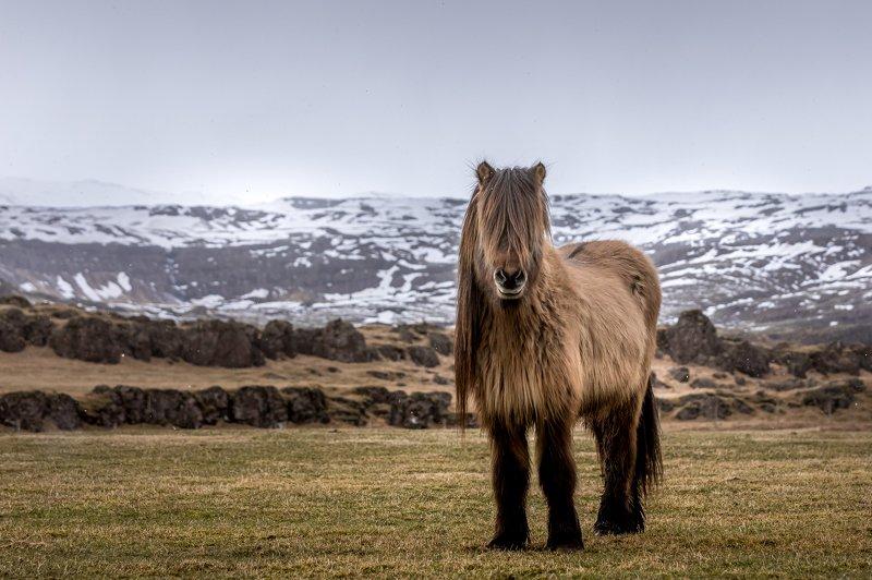 Icelam Iceland  фото превью