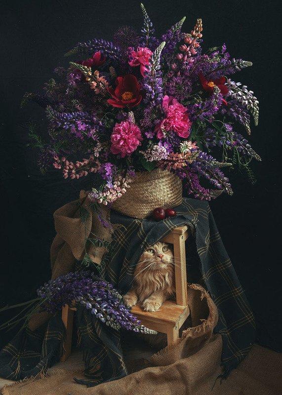 букет, натюрморт, кот, пионы, люпины Букетphoto preview