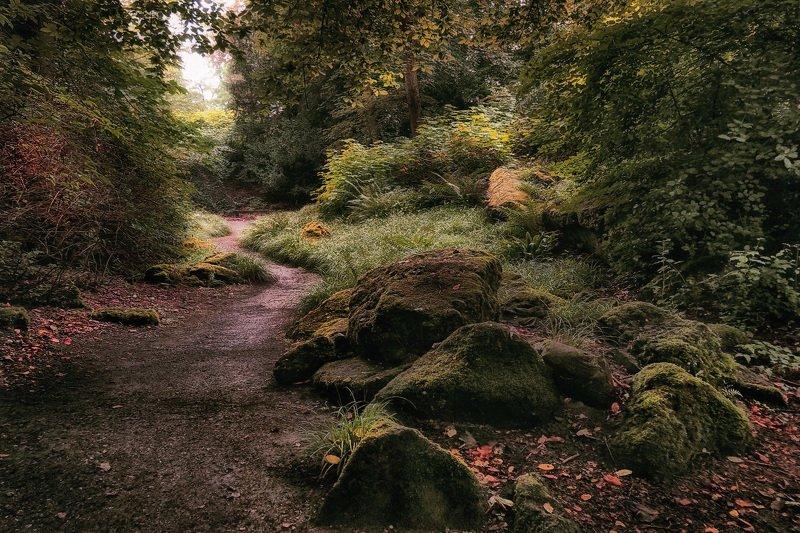 лес, природа, тропинка, камни Тропинкаphoto preview
