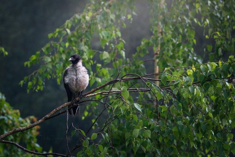 природа, лес, поля, огороды, животные, птицы, макро Очаровашка фото превью
