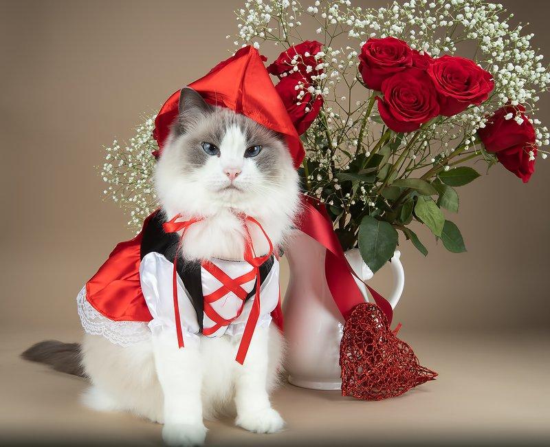 рыжий кот, кот, ginger,  домашнии любимцы, cat, ragdoll cat, ragdoll,  рэгдолл Матильда и Рыжикphoto preview
